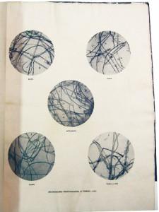 5 繊維分析写真