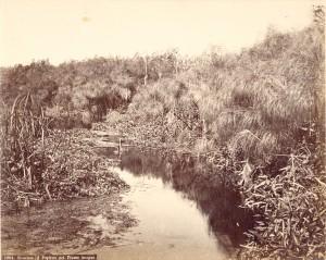 増田 1 シシリー島のパピルス